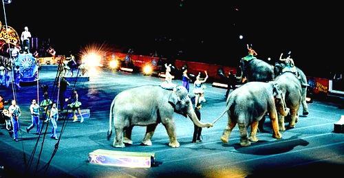Nueva York prohíbe los elefantes en los circos