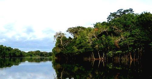 La actividad minera destruye un 12% de selva amazónica
