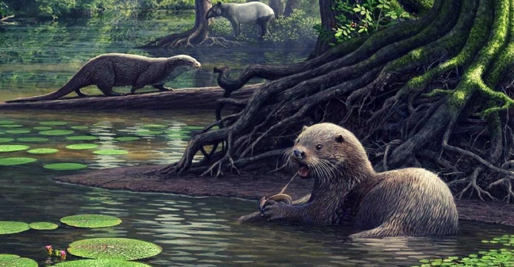 Identifican el fósil de una nutria prehistórica con el tamaño de un lobo