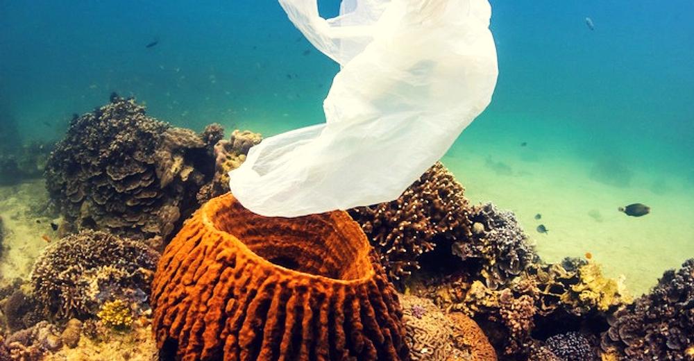 La contaminación por plásticos alcanza los fondos abisales del océano Pacífico