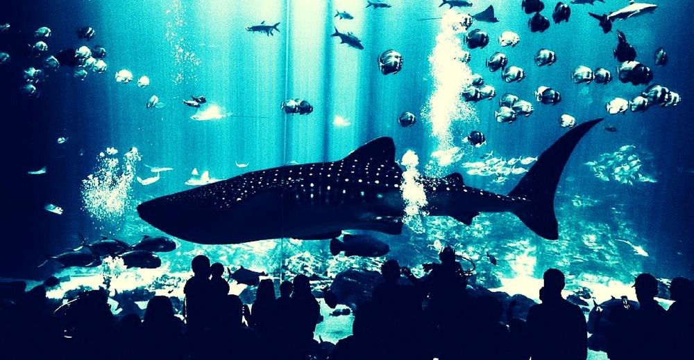 Mueren más de 1.200 peces en un acuario de Tokio por un fallo técnico