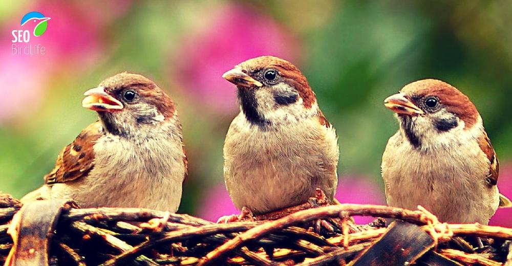 Aves comunes en España sufren descensos de población