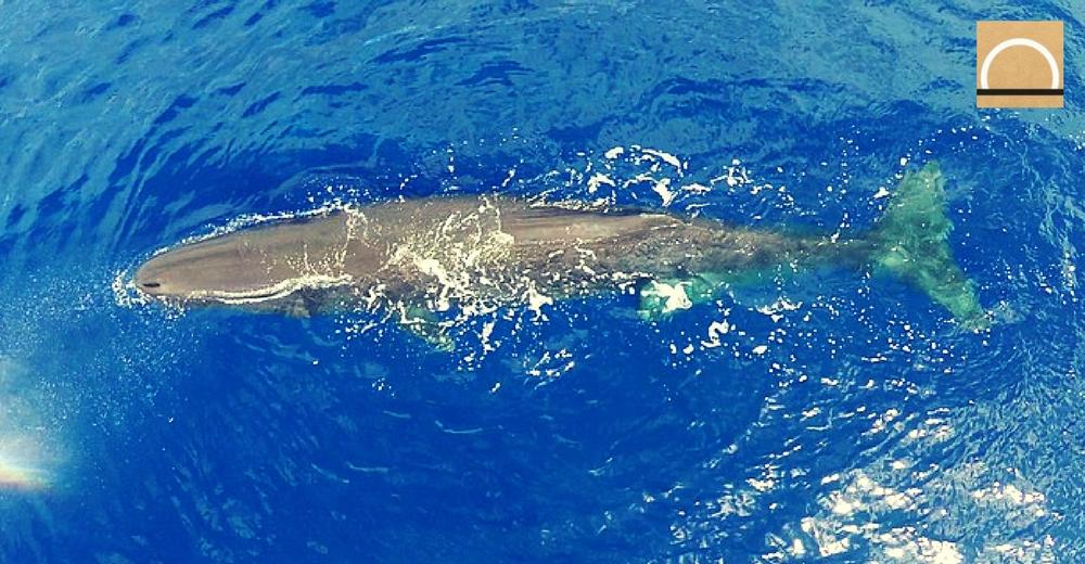 Medio Ambiente cuenta con ecologistas y pescadores para los nuevos planes de cetáceos