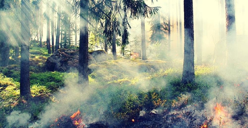 Estudios indican que las cenizas de los incendios contaminan el agua