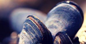 Los mejillones son aliados para descontaminar las aguas de Nueva York