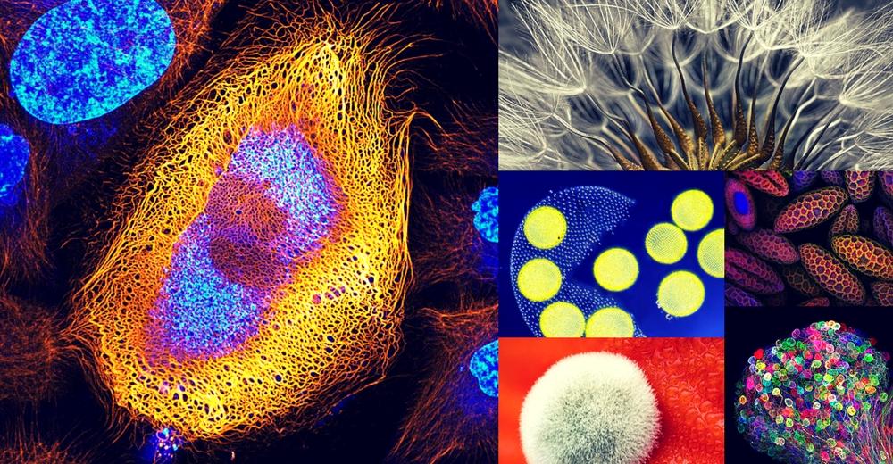 """""""Nikon Small World"""" el concurso con las fotos microscópicas más bellas"""
