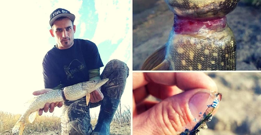 Encuentran a un pez con el cuerpo deforme debido a una envoltura de plástico