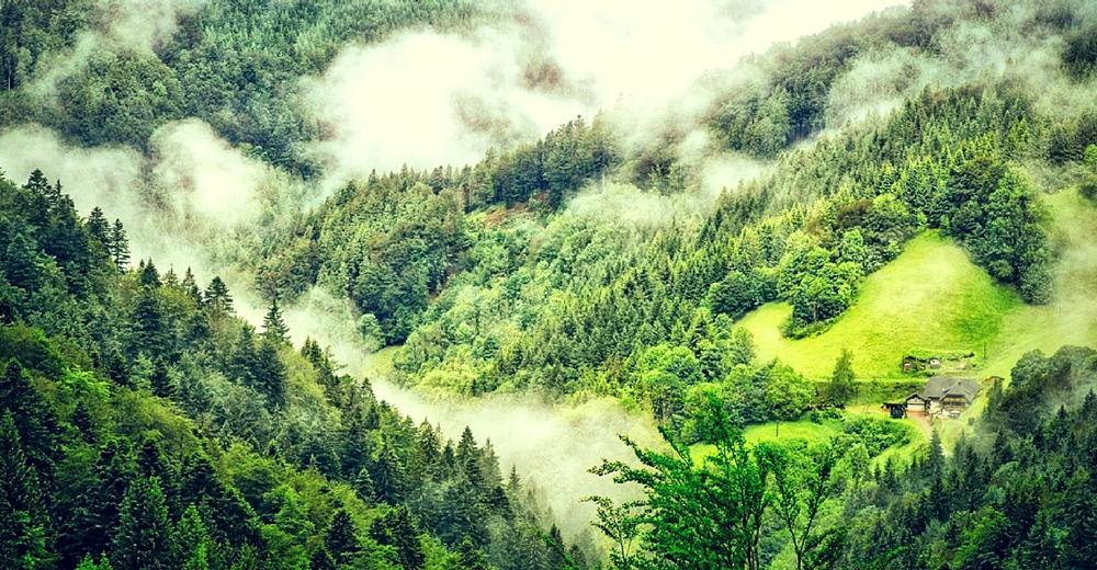 La modificación de los humanos en los bosques deja a centenares de especies sin territorio