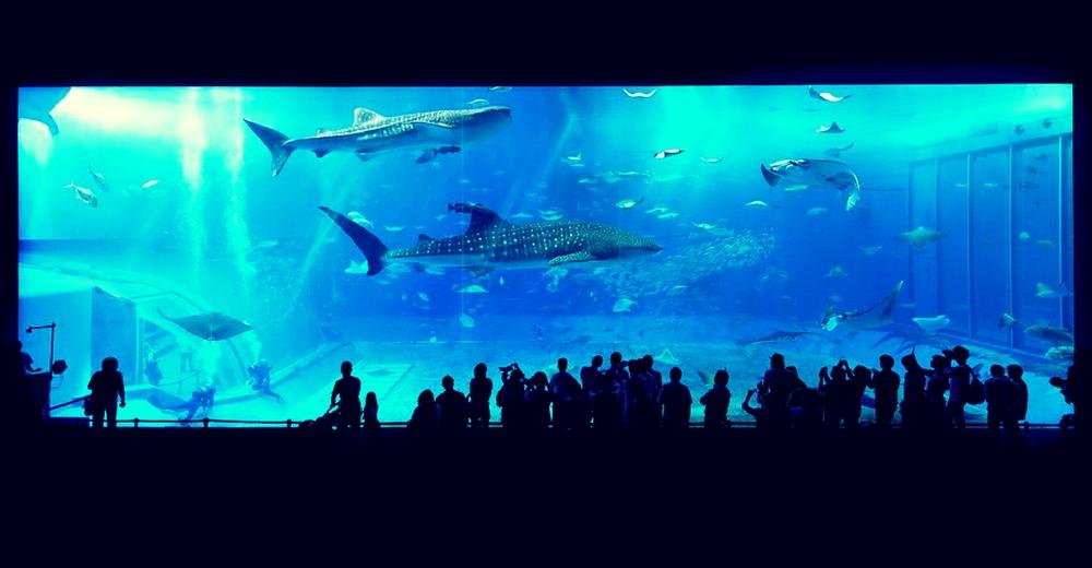 Peligra el futuro de las rayas y los tiburones debido a la pesca recreativa