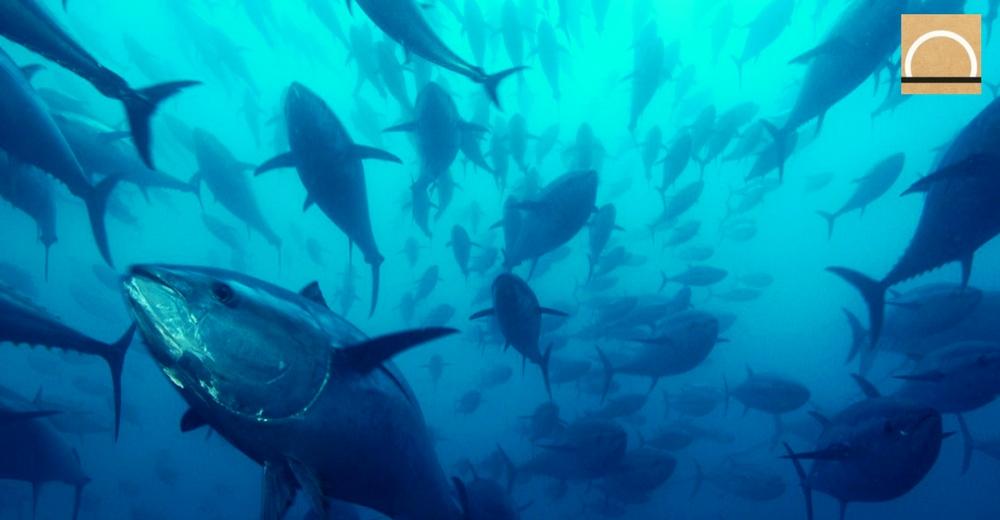 WWF y la flota atunera española planean minimizar el impacto ambiental de la pesca