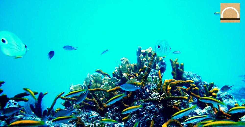 La ONU anunció una convención para proteger la biodiversidad en alta mar