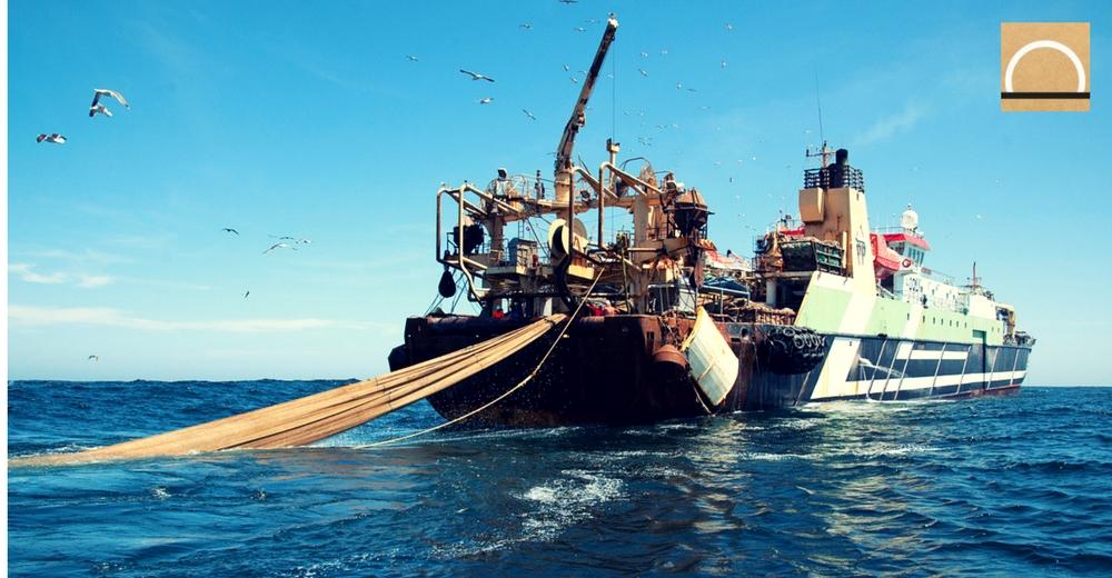 Oceana exige a la UE que imponga límites a la pesca industrial en 2018