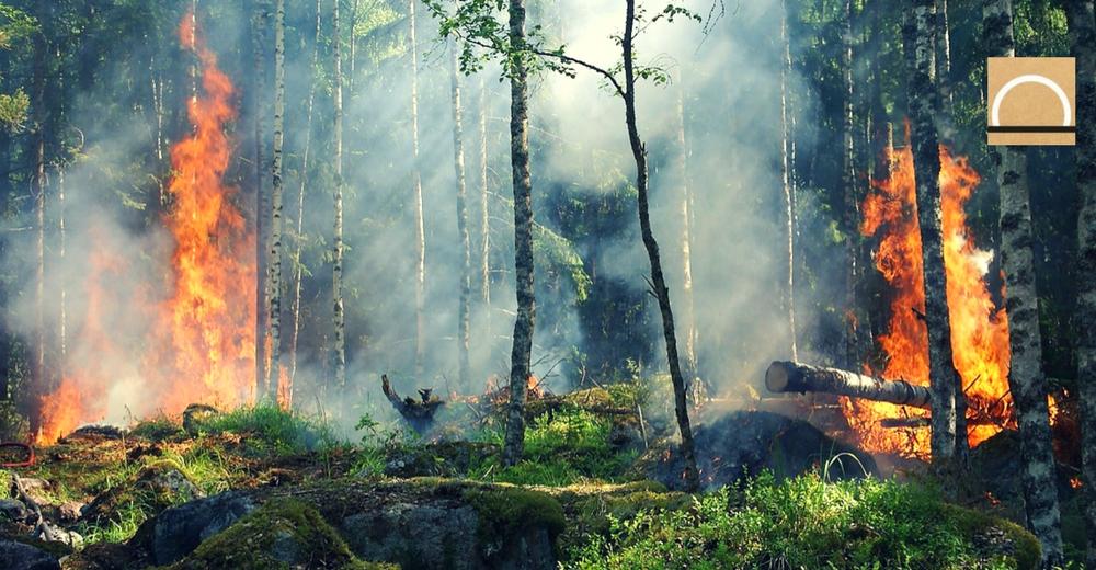 2017 será el año con más incendios forestales de la década