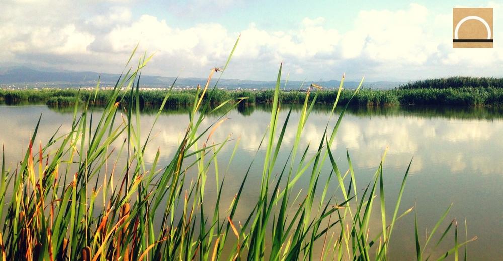 La biodiversidad en las cuencas de agua dulce del Mediterráneo bajo riesgo