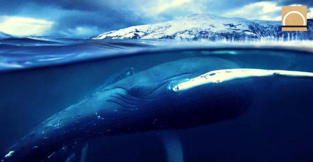 El final de Blue Planet 2 detalla el daño causado en los mares