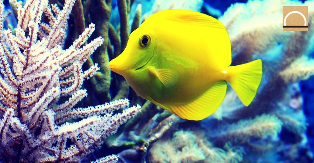 En los últimos 20 años los ecosistemas marinos se han deteriorado rápidamente