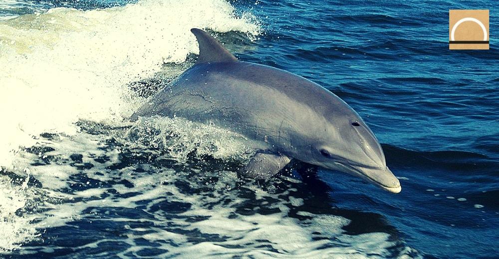 Se prohíbe realizar sondeos petroleros en la reserva de cetáceos del Mediterráneo