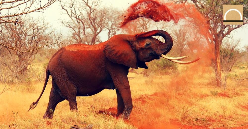 La población de elefantes en Mozambique se reduce a la mitad debido a la caza furtiva