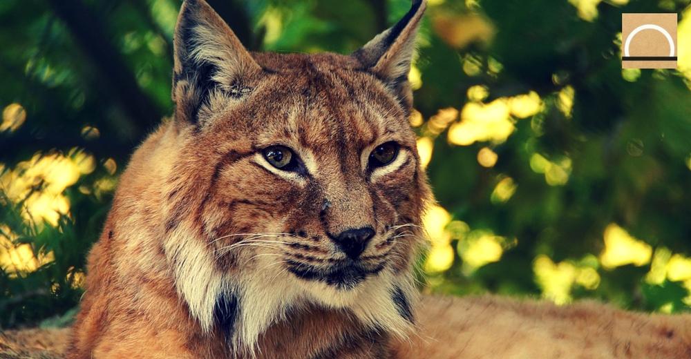 ¿Urge más el cambio climático o la extinción de las especies?