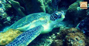 """España asienta las bases de """"Life Intemares"""", el proyecto de conservación marina"""
