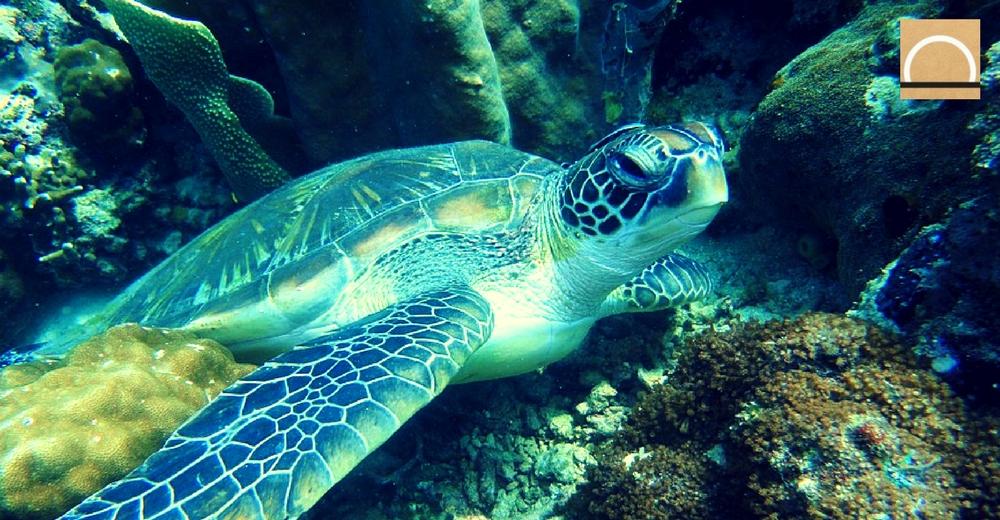 España asienta las bases de «Life Intemares», el proyecto de conservación marina