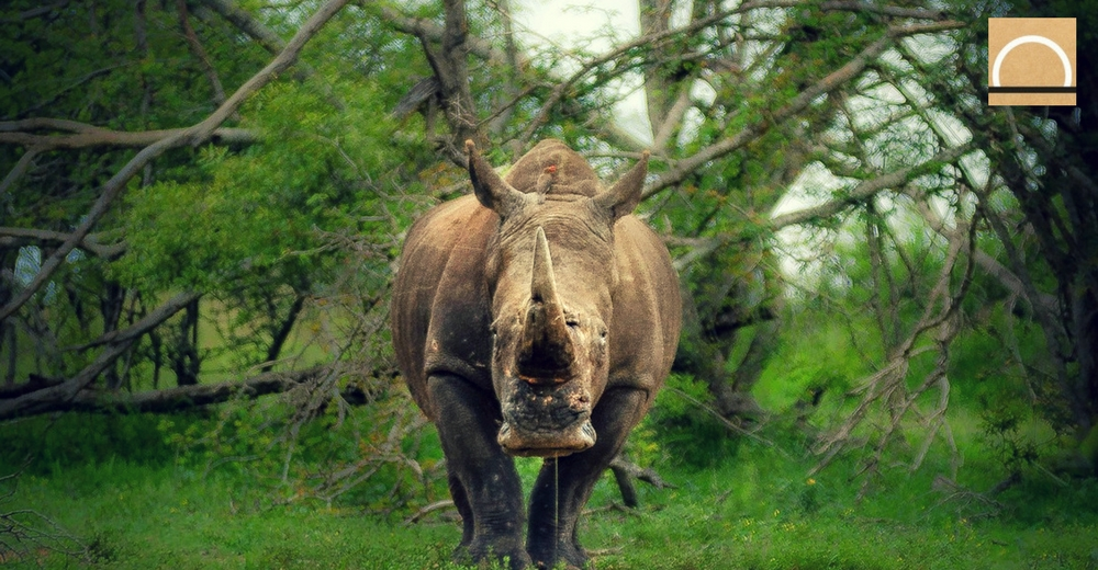 El impacto de las guerras en la fauna africana