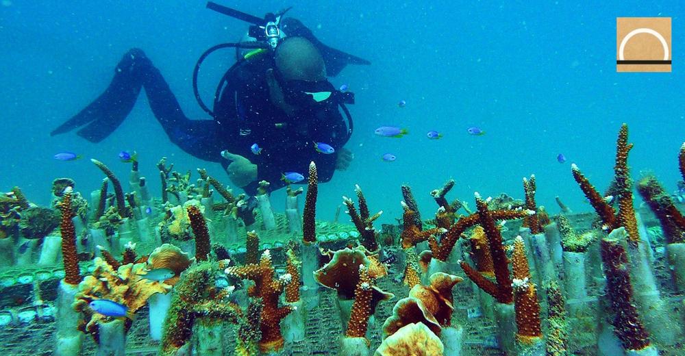 El ingeniero español que lucha por salvar los arrecifes de coral en Tailandia