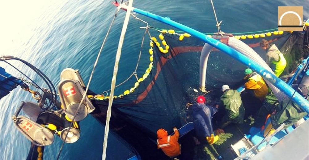 La pesca eléctrica, a debate en la UE