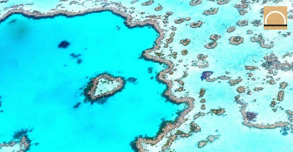 Australia destina 48 millones de dólares al mayor sistema coralino del mundo
