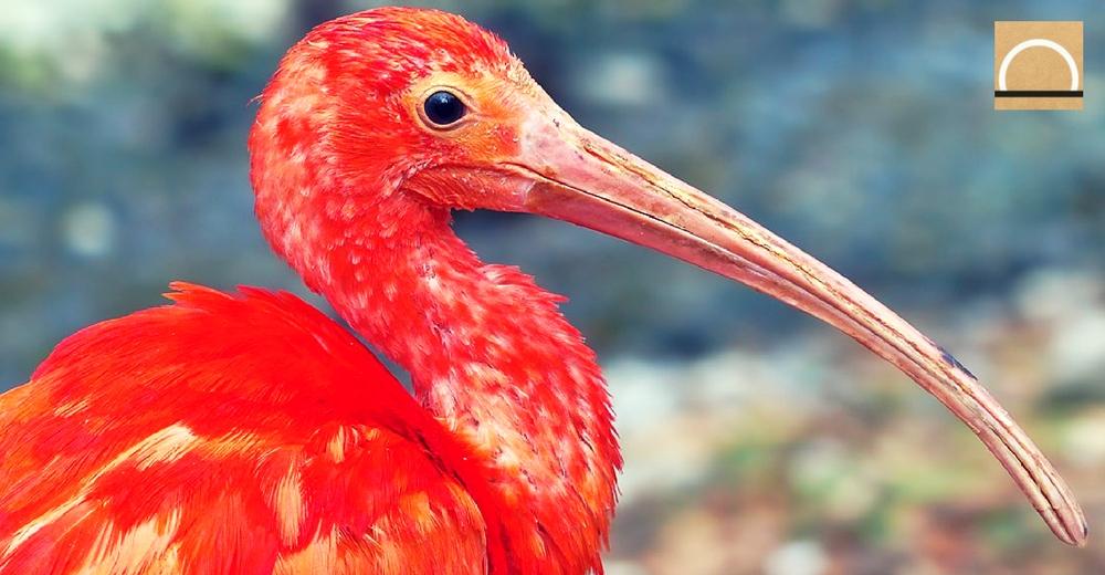 Los mamíferos y las aves se adaptan mejor al cambio climático