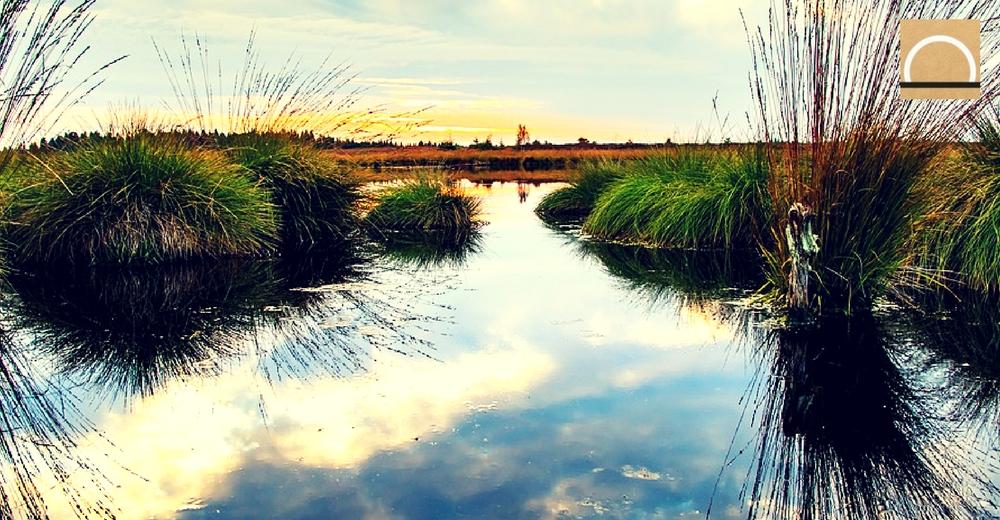 SEO/BirdLife denuncia la precaria situación de los humedales en España