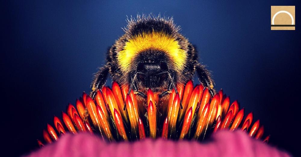 La UE pretende prohibir tres insecticidas que amenazan a las abejas