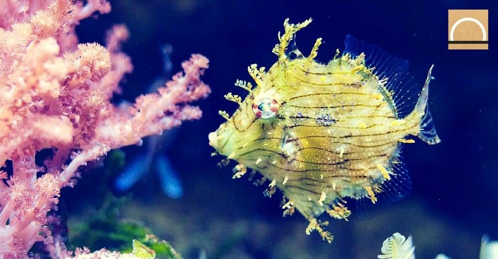 El aumento de temperatura de los mares y océanos influye en la pérdida de oxígeno