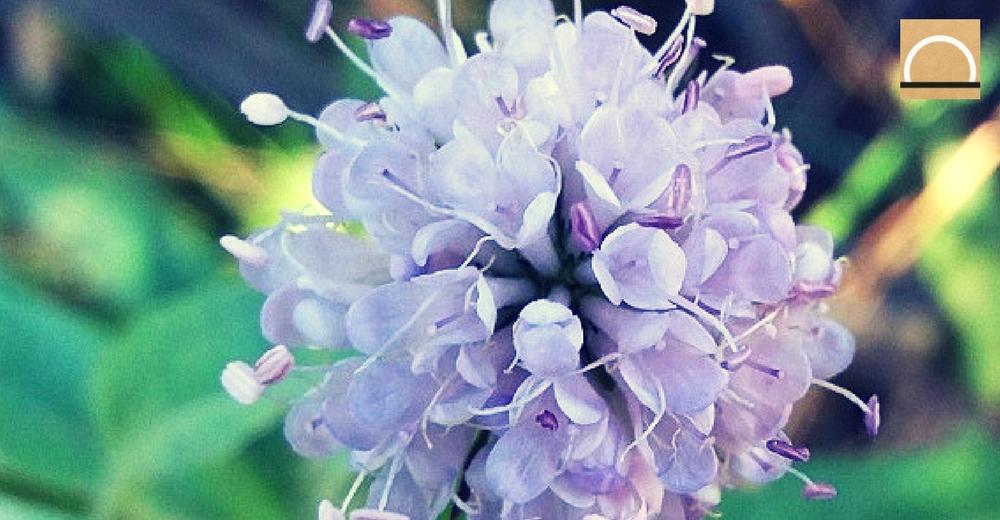 Descubren en Sierra Nevada una nueva especie de flora