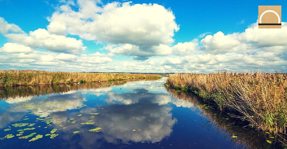 El agua dulce sustenta a casi el 6% de todas las especies identificadas