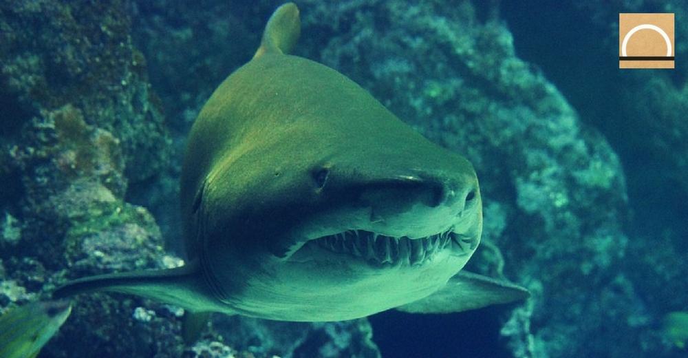 Los peces cambian la forma del cuerpo debido al declive de tiburones
