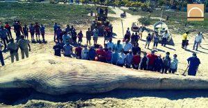 Los mamíferos de Yucatán atrapados por las redes