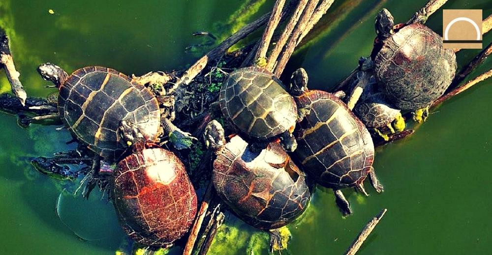 Solución al abandono de tortugas en la estación de Atocha (Madrid)