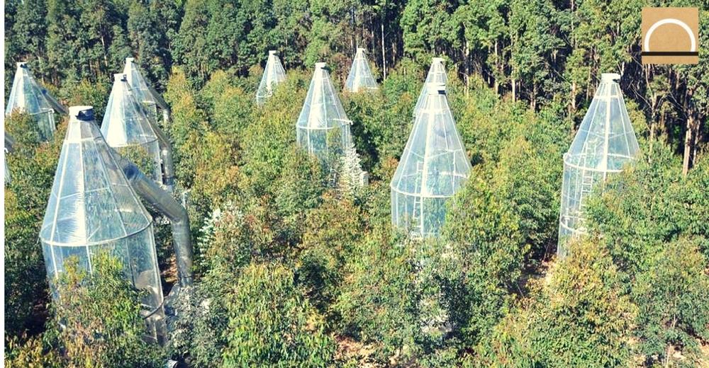 Los árboles transpirarían más a causa del Cambio Climático