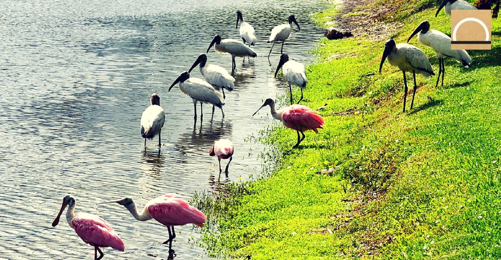 Los acuíferos de los Everglades (Florida) sufren una alarmante salinización