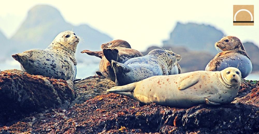 Los movimientos por el océano de ballenas, focas y aves marinas son parecidos