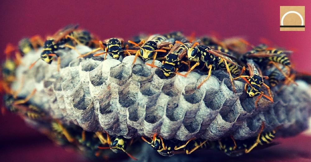 Se expanden las especies exóticas invasoras