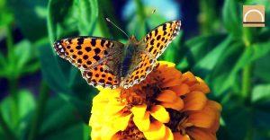 La desaparición de mariposas en Perú debido a la tala de árboles