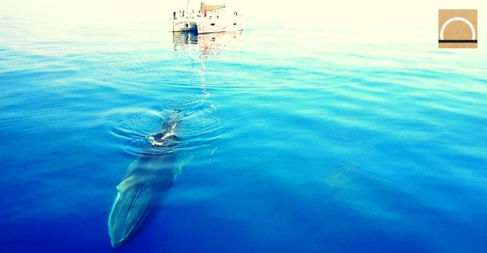 Pescadores descubren las dos primeras ballenas de 2018 en la costa catalana
