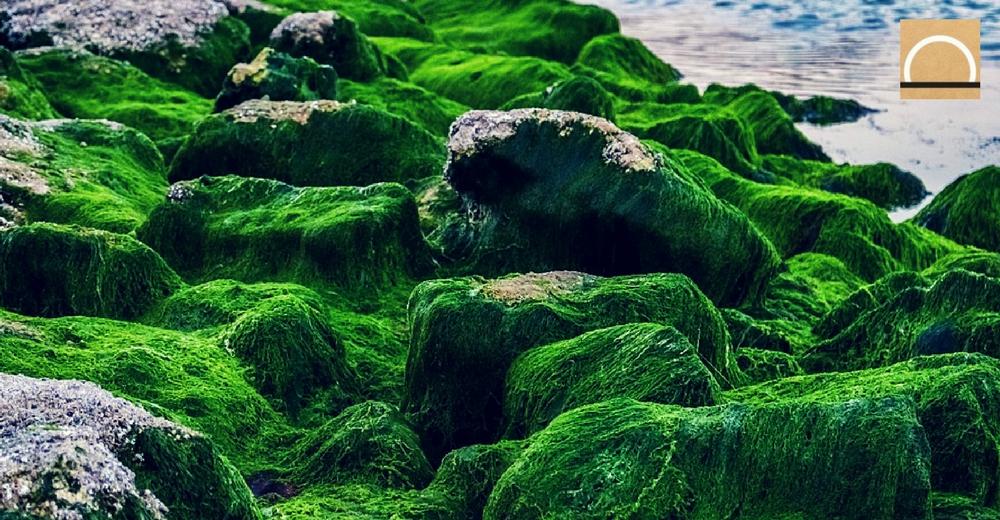 El cambio climático reduce el área de algas, musgos y líquenes