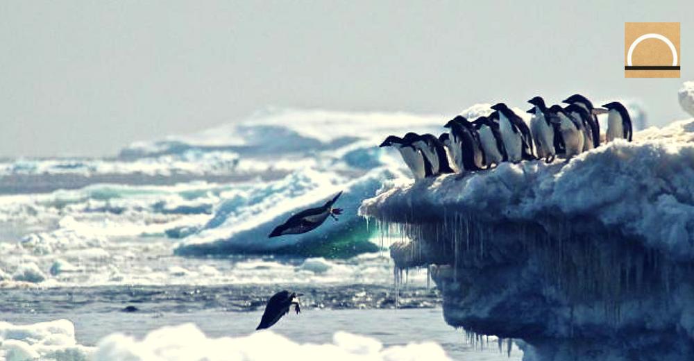 Encuentran una supercolonia de 1,5 millones de pingüinos en la Antártida