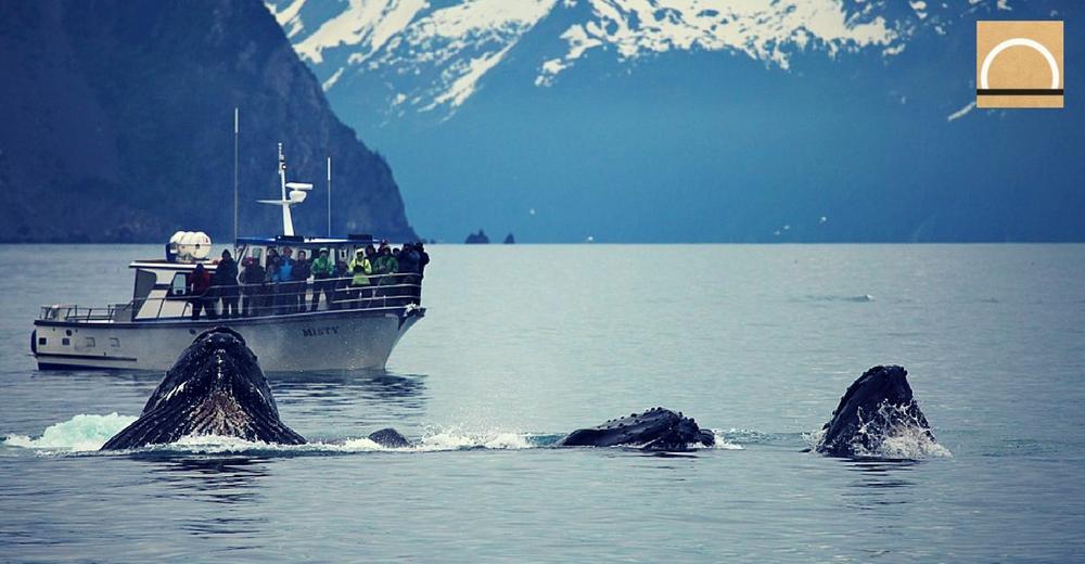 El gobierno noruego autoriza la captura de 1.278 ballenas durante este año