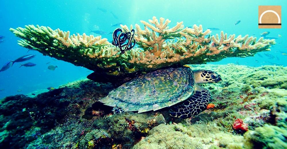 Crean primer fondo para proteger un arrecife de coral