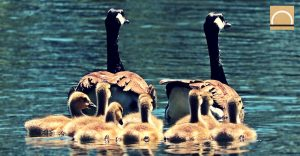 """WWF propone """"autopistas salvajes"""" para la circulación de la vida silvestre"""