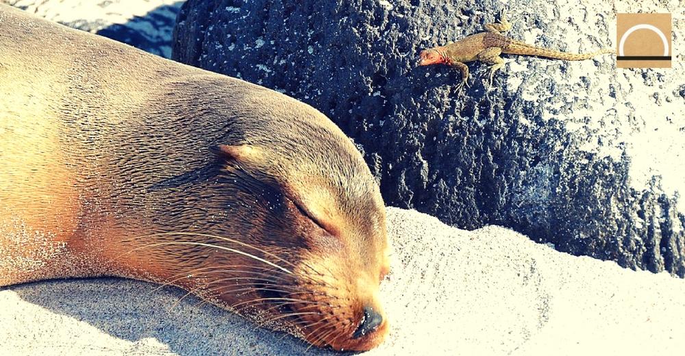 """Un año de """"guerra contra el plástico"""" en las Galápagos"""